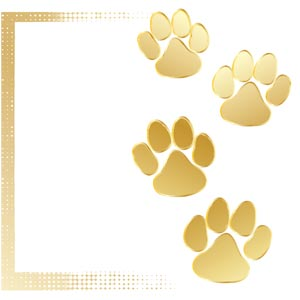 3848 - Gold Paws