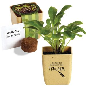 Teacher_Welcome_Gifts_Flower_Pots
