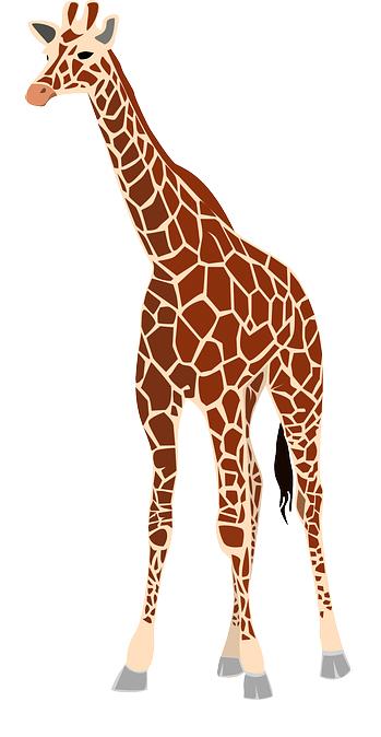 Giraffe_Zoo